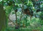 , Terrain & Parcelle à vendre à Conakry à Yattaya, La façon la plus simple de trouver & réserver ou acheter votre nouvelle maison, La façon la plus simple de trouver & réserver ou acheter votre nouvelle maison